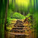 A Path to the Forest by Dave Harnetty
