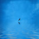 Blue Water Flying by Dave Harnetty
