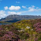 August Heather in Sutherland by jacqi