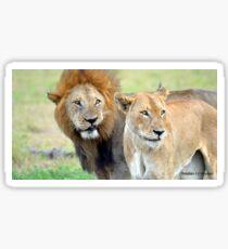 Lion Pair Sticker