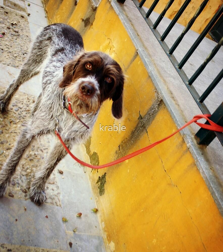 El Perro en Espana by krable