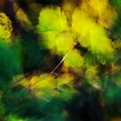 Yellow and green  blown by the wind by Patrick Morand