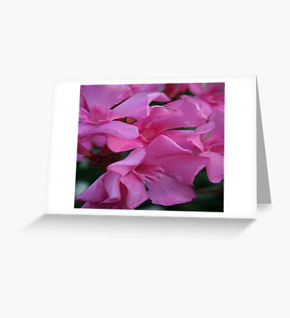 Closeup Shot of Pink Flowers on Oleander Shrub Greeting Card