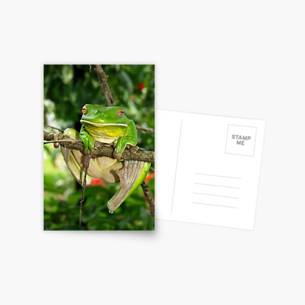 Giant White-Lipped frog Postcard