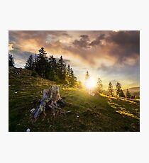 stump in front of fir forest on hillside at sunset Photographic Print