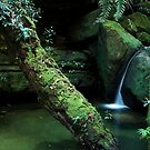 Salote Pool - Blue Mountians NSW by Dilshara Hill