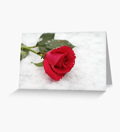 A rose on the snow Greeting Card