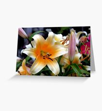 Tequila Sunrise Lily with Raindrops Greeting Card