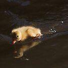 Turbo duckling by turniptowers