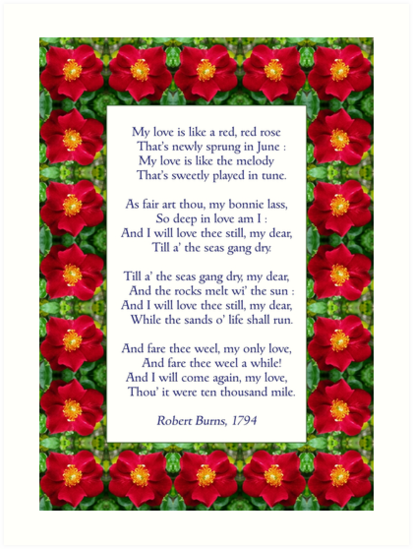 My Love Is Like A Red Red Rose Burns Anglicised Art Print By Philip Mitchell
