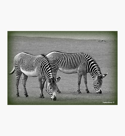A Matching Pair Photographic Print
