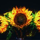 Sunflowers by Nigel Bangert