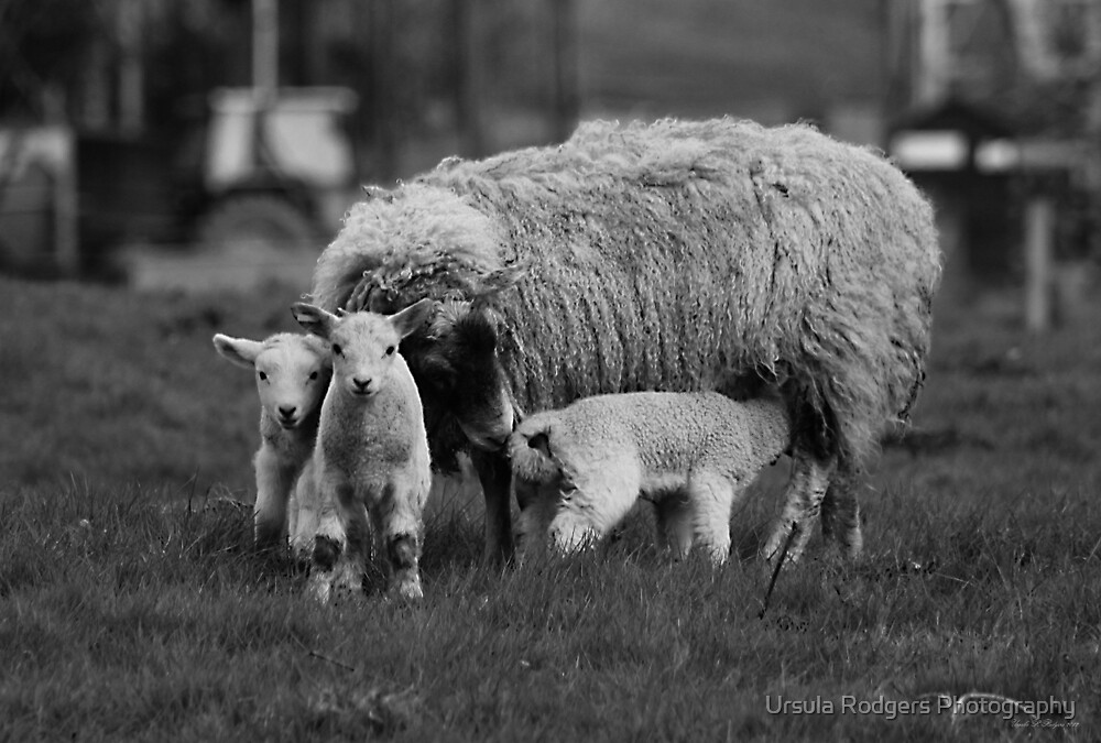 Family by Ursula Rodgers Photography