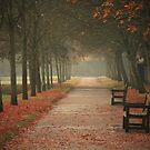 Autumn Morning by Ursula Rodgers Photography