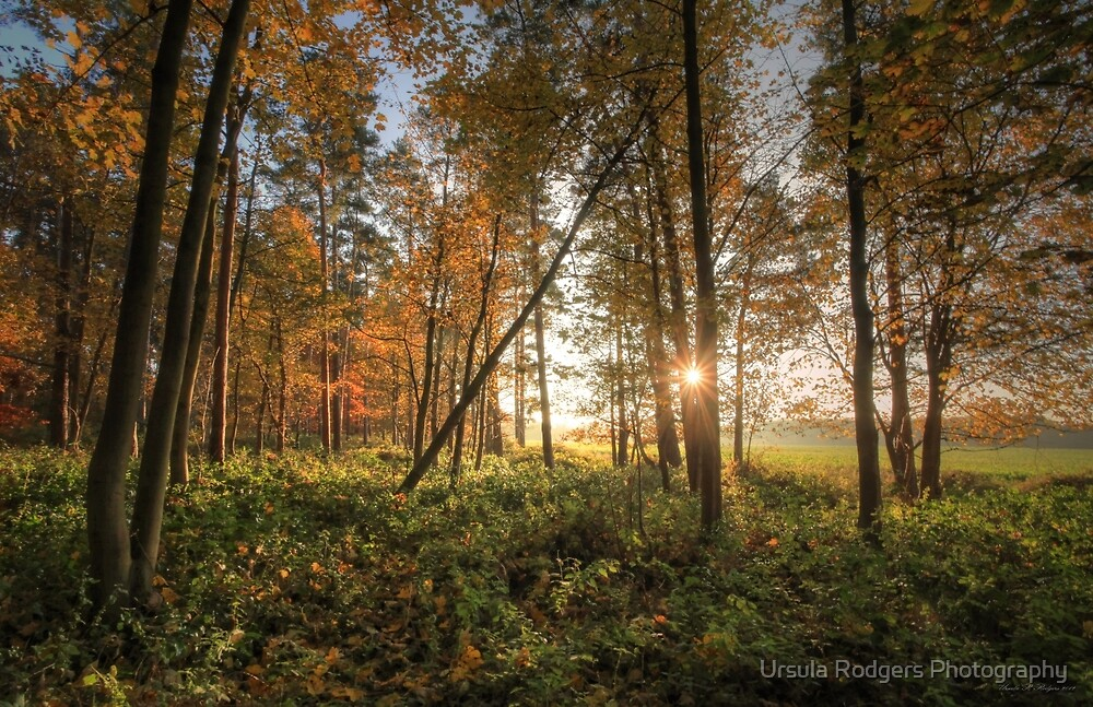 Autumn in the Forest by Ursula Rodgers Photography