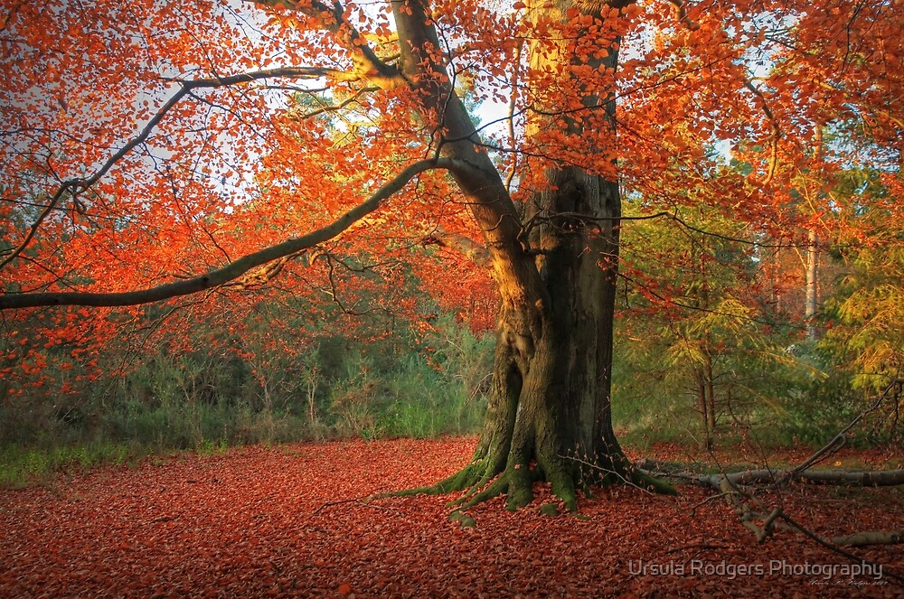 Russet Beauty by Ursula Rodgers Photography