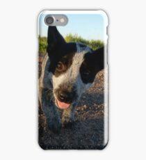 Zip the Blue Heeler iPhone Case/Skin