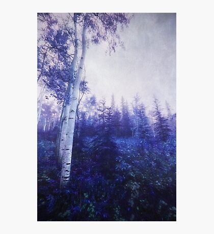 Wander trough the foggy forest Photographic Print