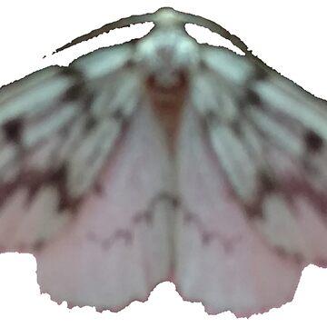 Unknown Moth #1 B by spookyluca