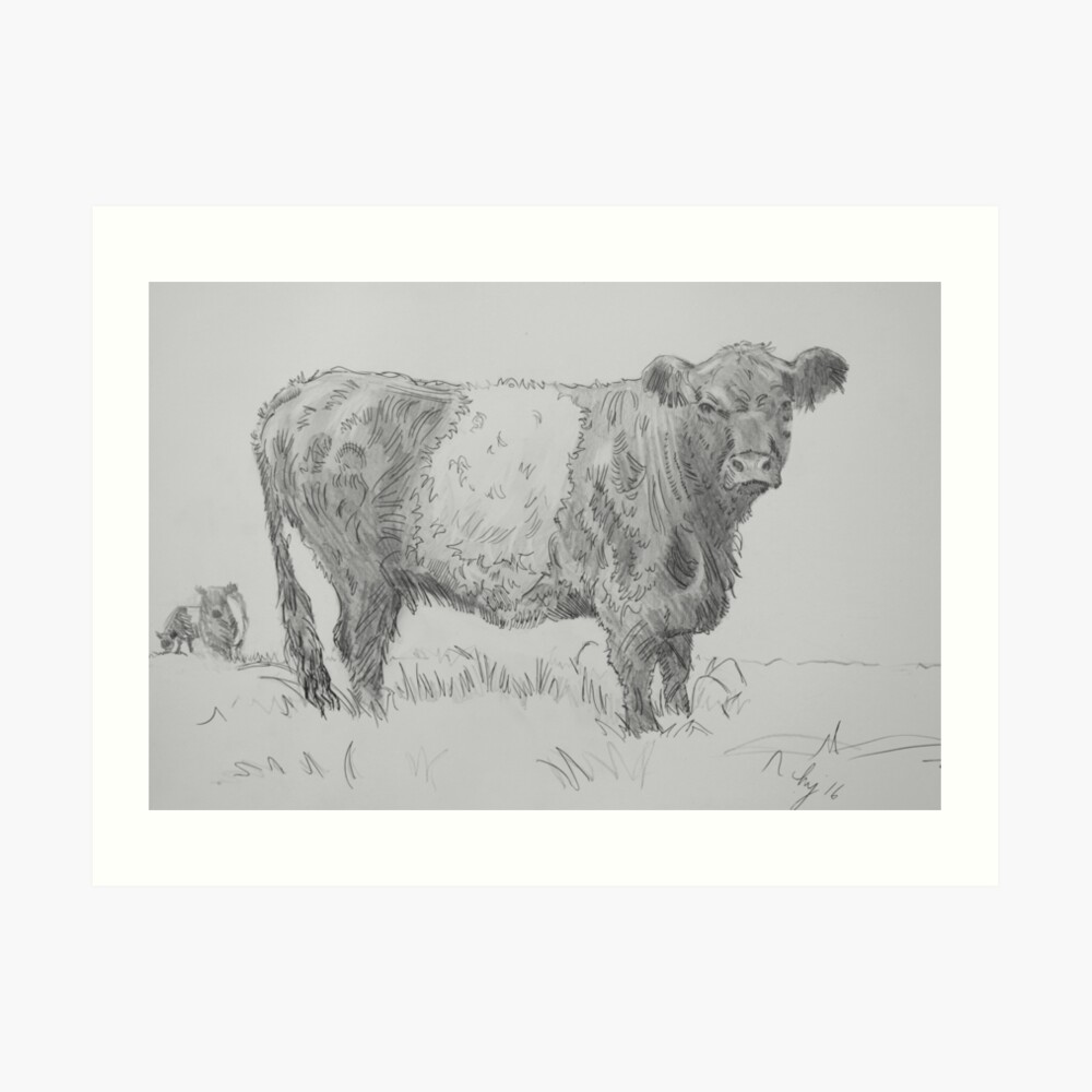 Belted galloway cow pencil drawing art print