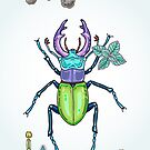 happy stag-beetle by smalldrawing