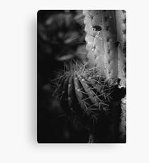Cactus Black and White II Canvas Print