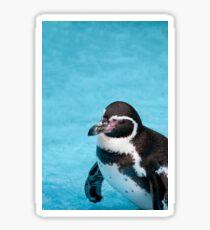 Magellanic Penguin Sticker