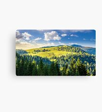 coniferous forest on the hill Canvas Print