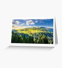 coniferous forest on the hill Greeting Card
