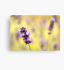 Lavender and green Canvas Print
