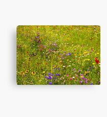 A field of wild flowers Canvas Print