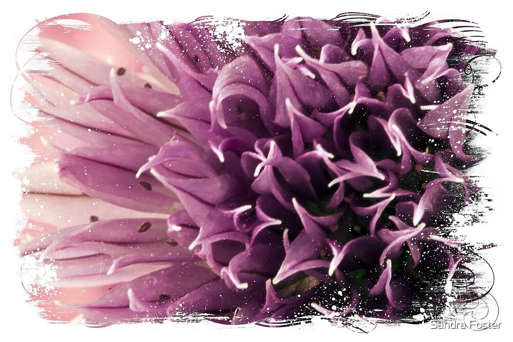 Chive Macro by Sandra Foster