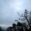 Day In Grey by doval