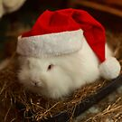 Festive Santa rabbit  by Barry Robinson