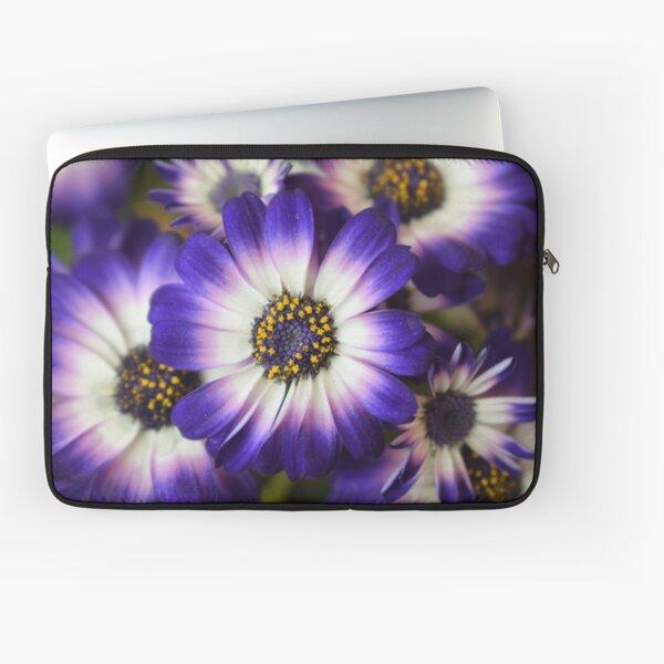 AFRICAN DAISIES - High Definition African Daisy Flowers HD Blue Puple African Daisy Laptop Sleeve