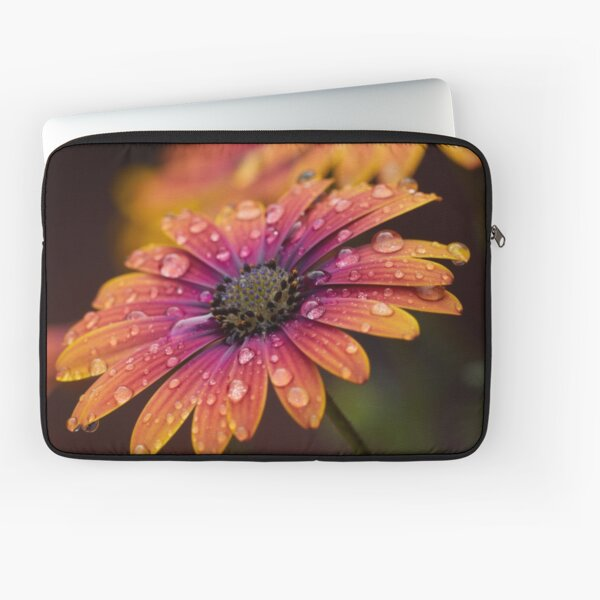 ORANGE AFRICAN DAISY - High Definition Macro Photo African Daisy Flower Floral Print Laptop Sleeve