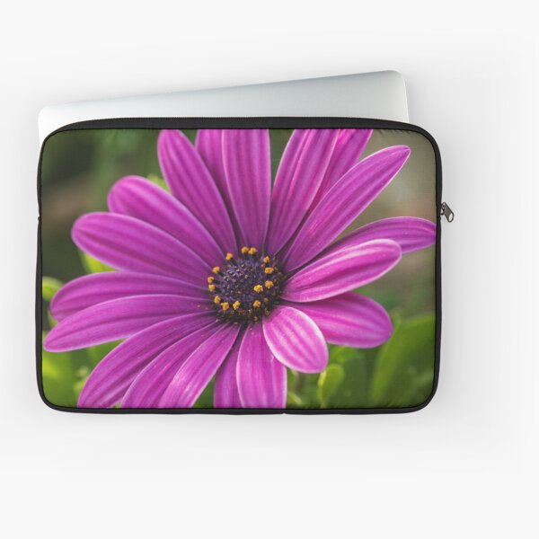 PINK AFRICAN DAISY - High Definition African Daisy Flower African Daisies Floral Print Laptop Sleeve