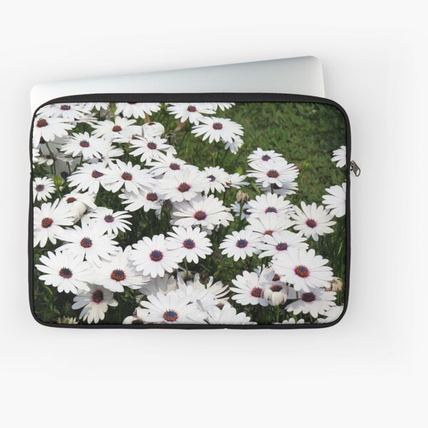 WHITE AFRICAN DAISIES - HD African Daisy Flowers Best High Definition Art Print Laptop Sleeve