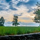 The Trees Up on the Hill at Sunset by Rebecca Bryson
