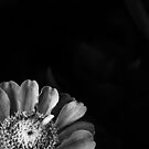 Petals by AnneDB