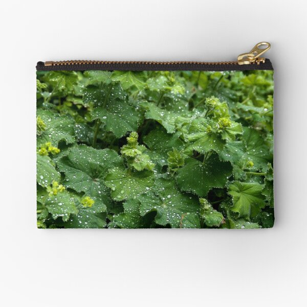 Alchemilla - High Definition Alchemilla Mollis Lady's Mantle Leaves Art Print Zipper Pouch