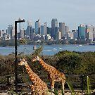 Sydney's wildlife by Diana Grunwald