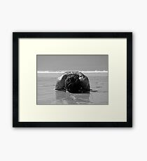 pebble on the beach Framed Print