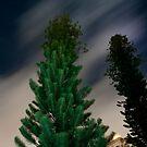 Trees at Night by Jacki Campany