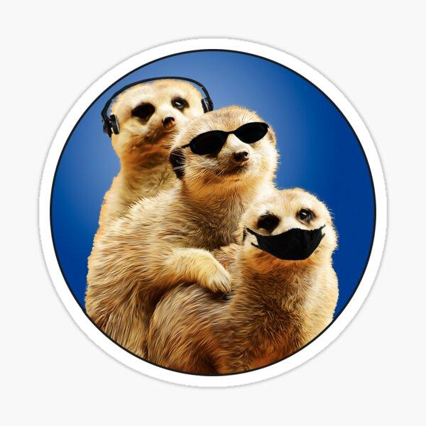 Humorous cute animal meerkats at play having fun design Sticker