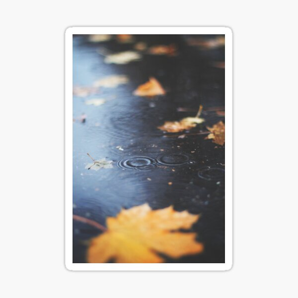 Autumn rain Sticker