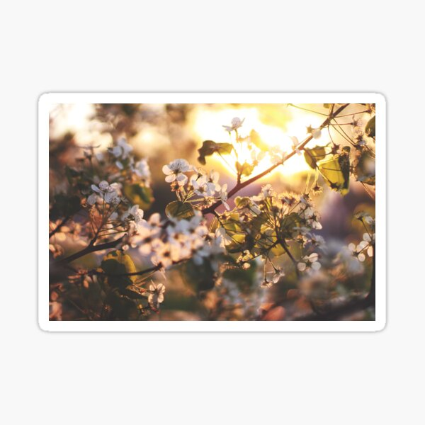 Gold flowers Sticker