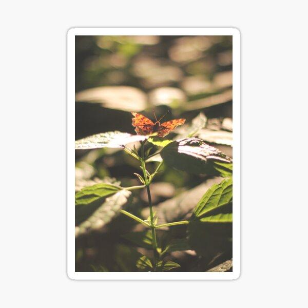 Butterfly ii Sticker