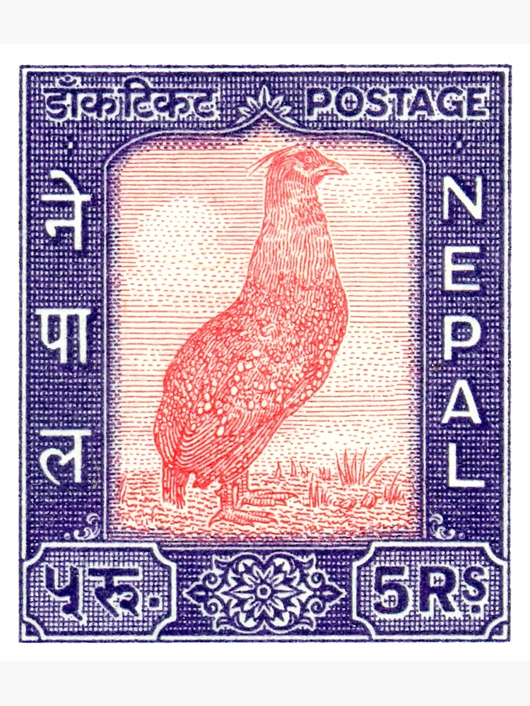 1960 Nepal Satyr Tragopan Postage Stamp by retrographics