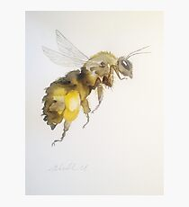 Honey Bee by Liz H Lovell Photographic Print